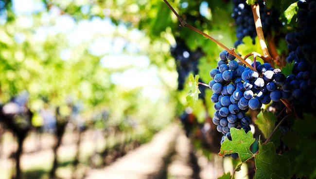 Vini Scirto di Passopisciaro a confronto con altri artigiani del vino etneo a Rimessa Roscioli
