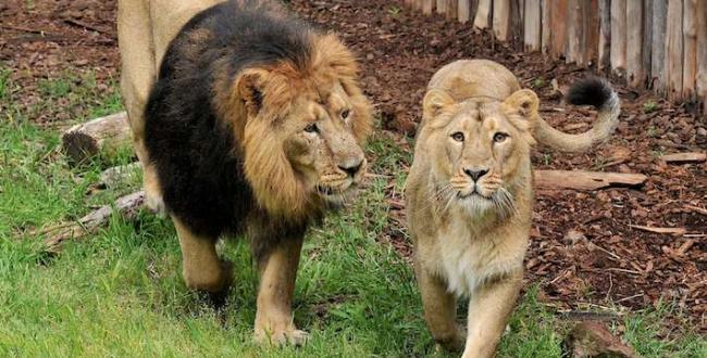logo bioparco roma giardino zoologico