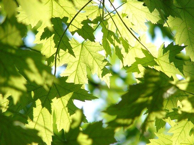"""""""Rami e foglie, amici inseparabili"""". Il laboratorio del weekend di Esplora"""